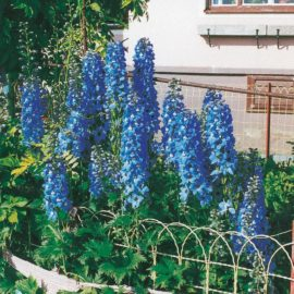 bluetenstauden-110