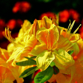 moorbeetpflanze-1