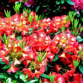 moorbeetpflanze-2