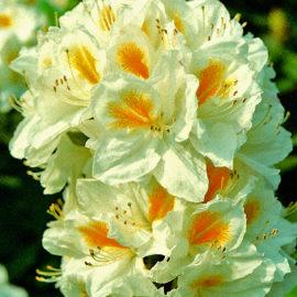 moorbeetpflanze-3