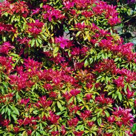moorbeetpflanze-5