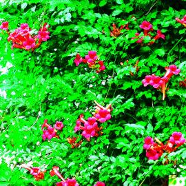 schlingpflanzen-15